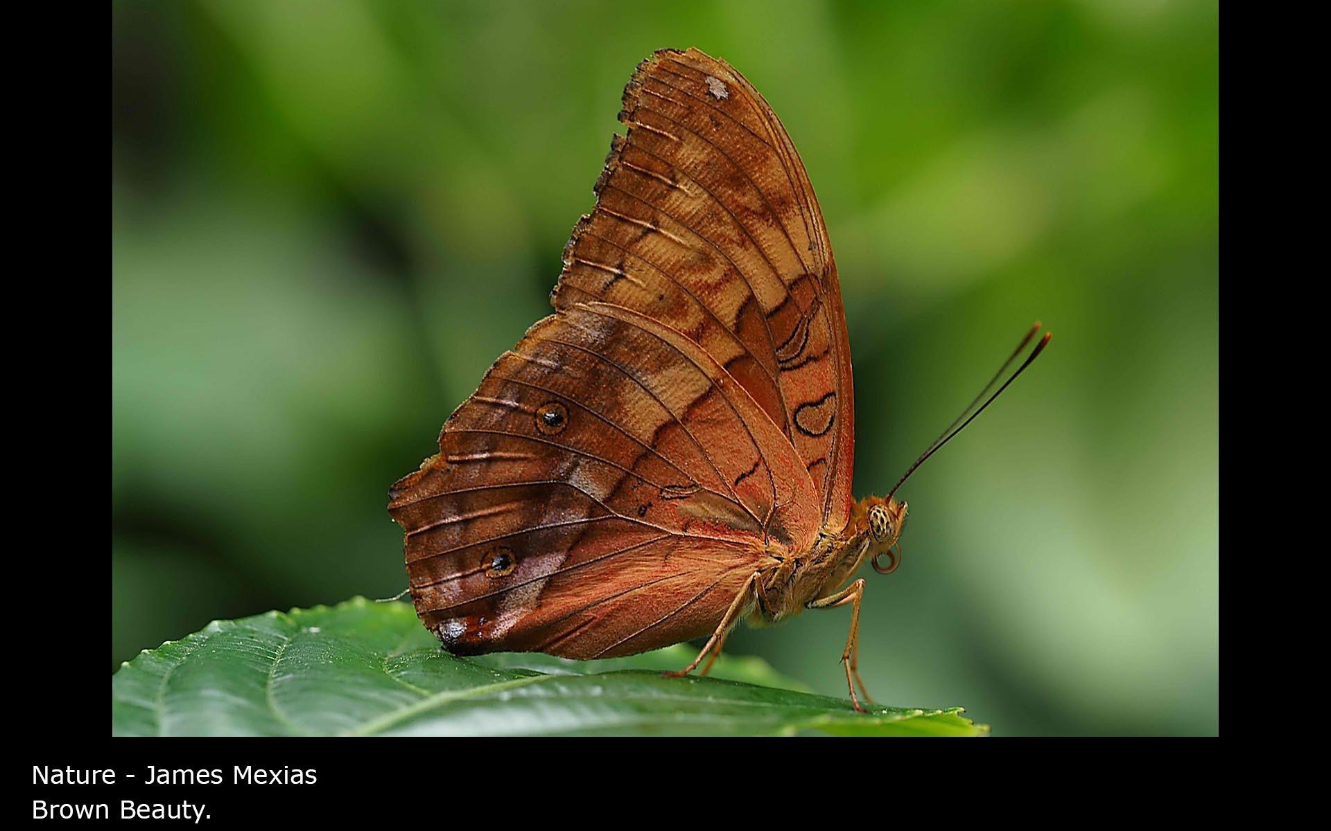 Brown Beauty. - James Mexias