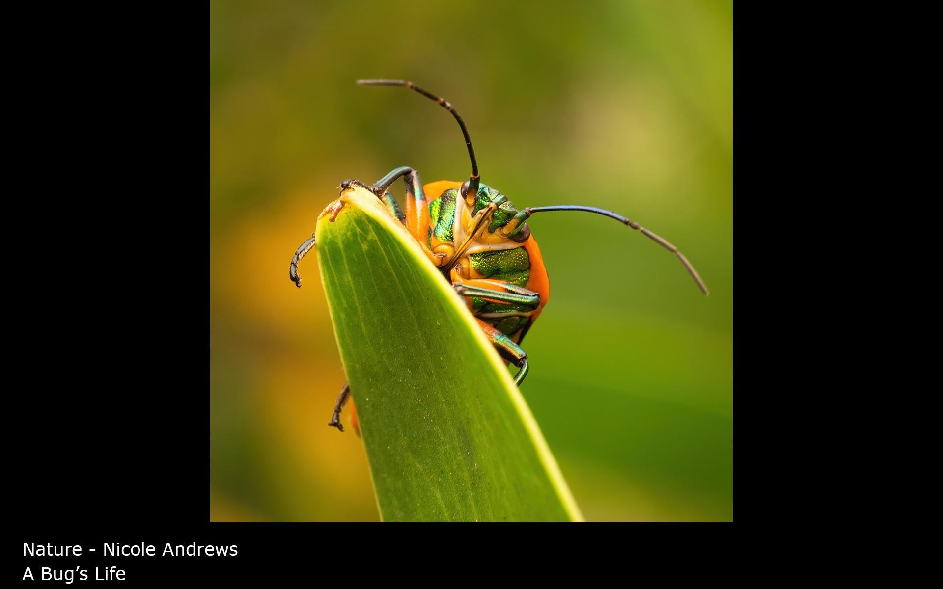 A Bug's Life - Nicole Andrews