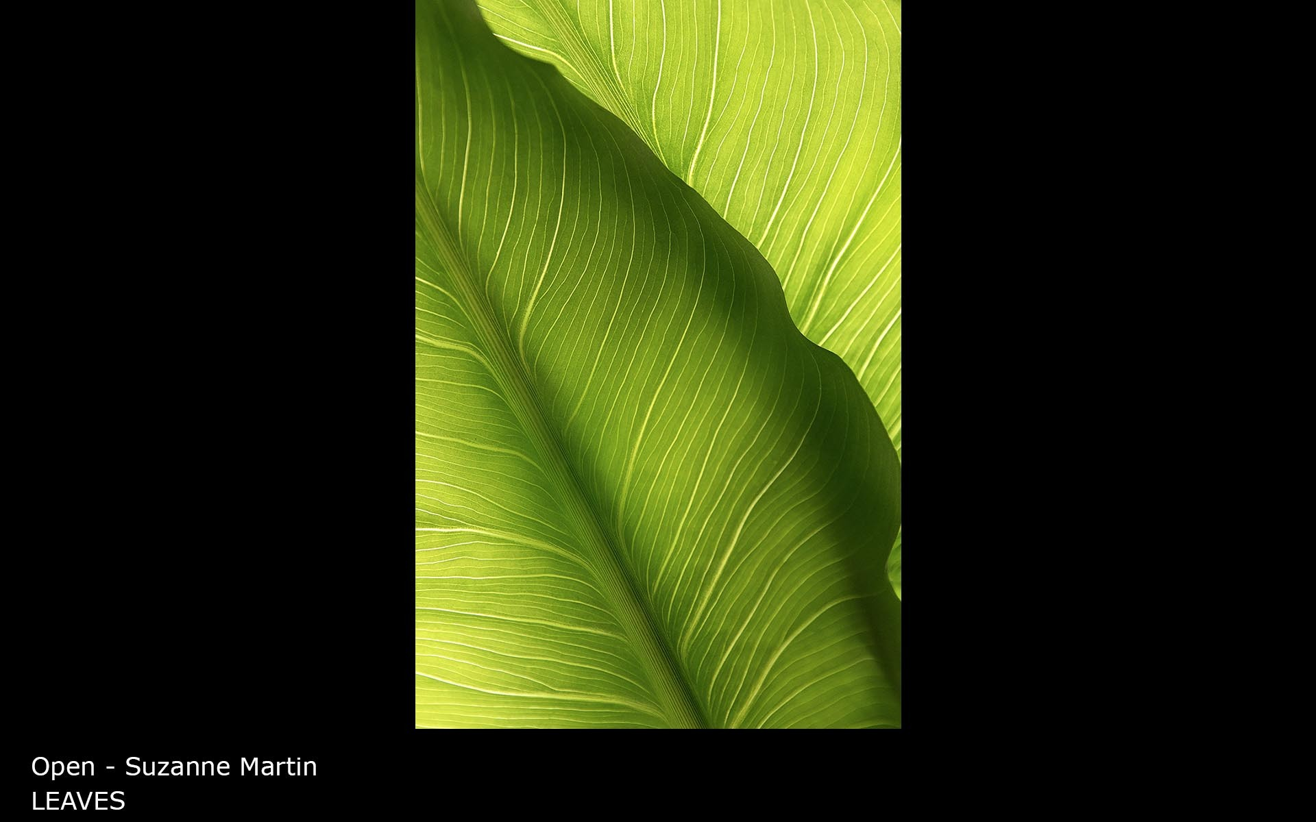 LEAVES - Suzanne Martin