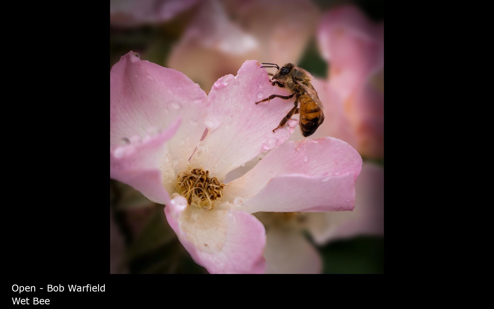 Wet Bee - Bob Warfield