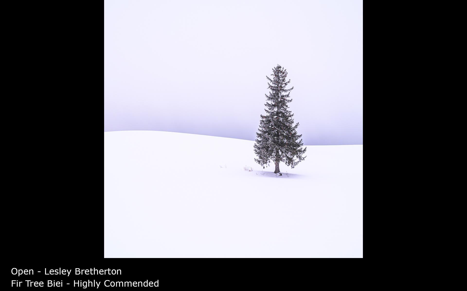 Fir Tree Biei - Lesley Bretherton