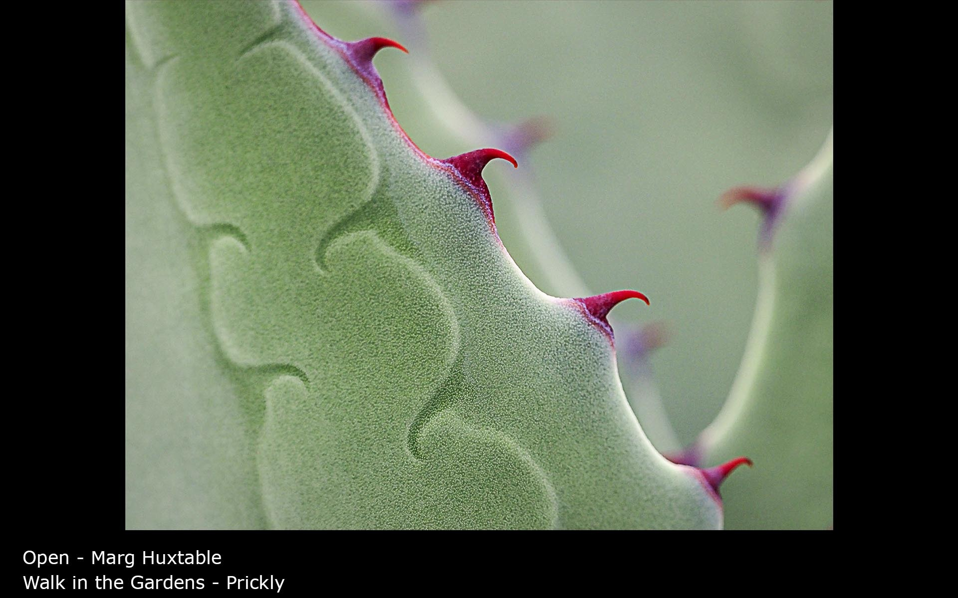 Walk in the Gardens - Prickly - Marg Huxtable