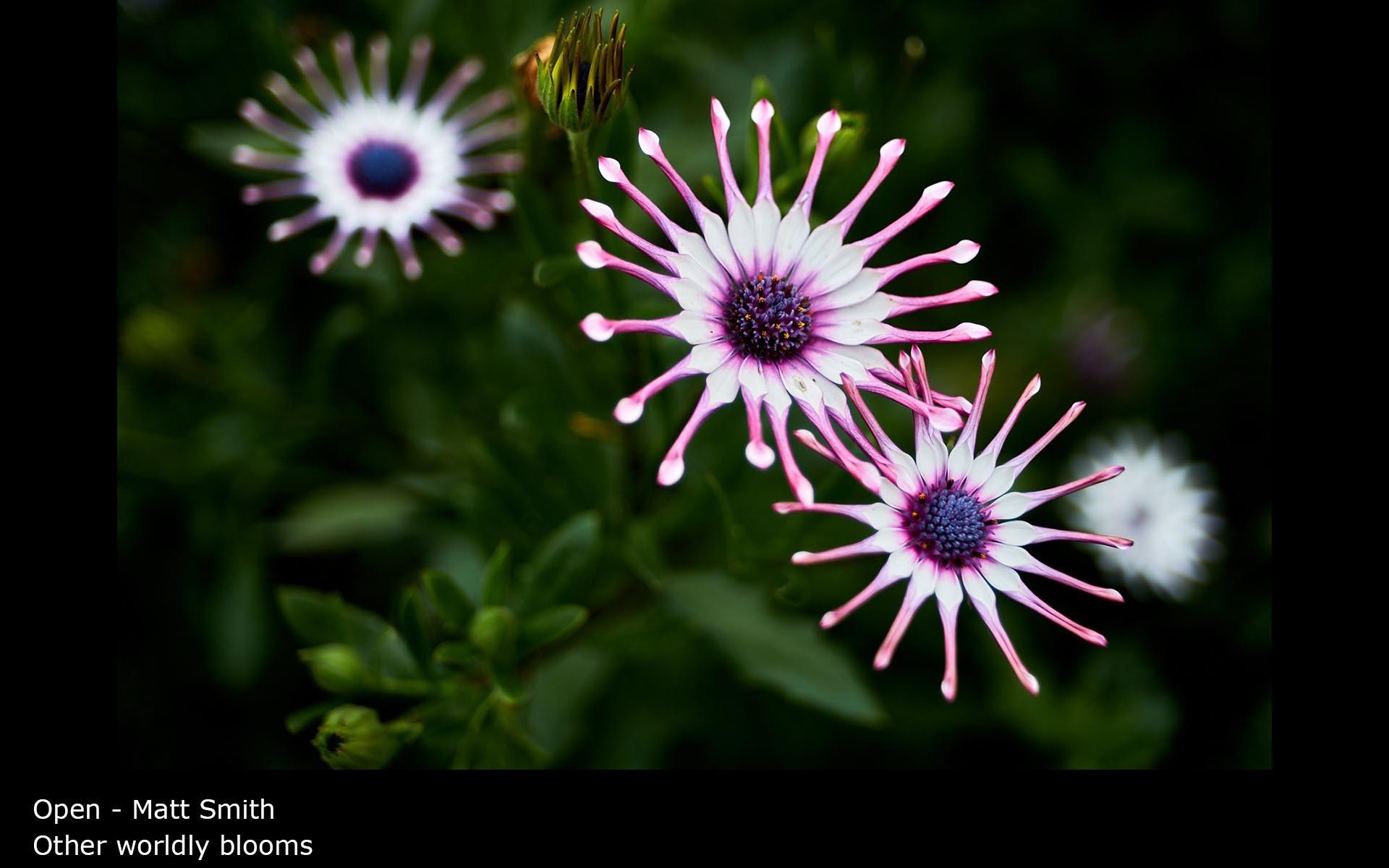 Other worldly blooms - Matt Smith