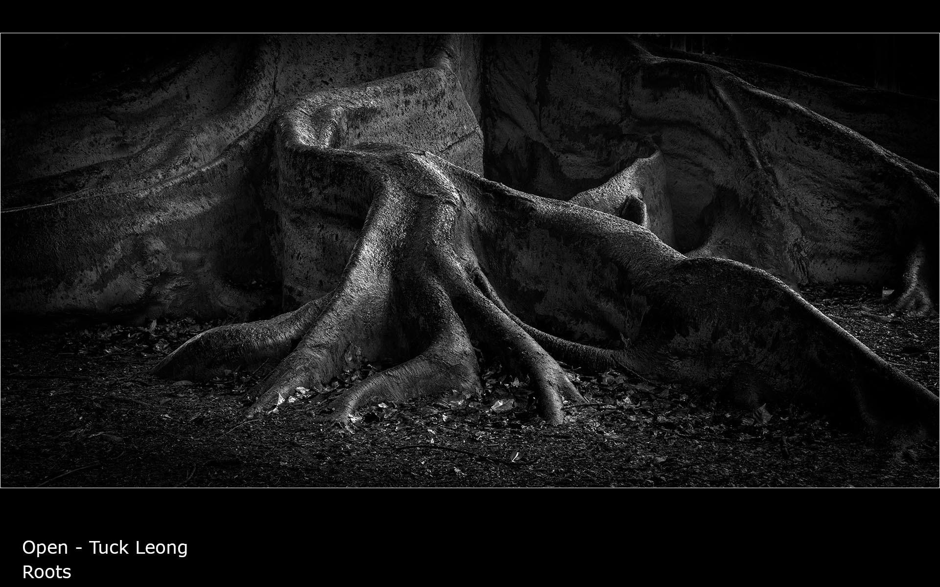 Roots - Tuck Leong