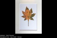 Chlorophyll Print - Sam 2020 - Mark Devaraj