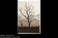 Lone tree Bairnsdale : carbon print - Denise Lawry