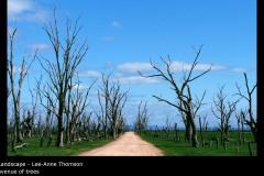 avenue of trees - Lee-Anne Thomson