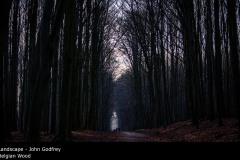 Belgian Wood - John Godfrey