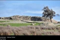 Dog Rocks - Adrian Fisher