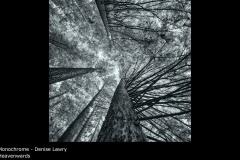 Heavenwards - Denise Lawry