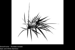 Black and White Bamboo - Annette Donald