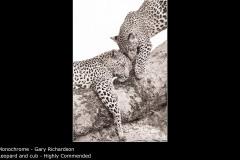 Leopard and cub - Gary Richardson