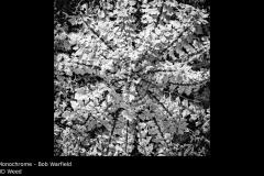 3D Weed - Bob Warfield