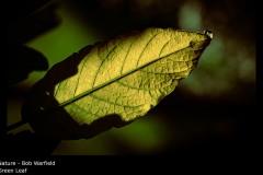 Green Leaf - Bob Warfield