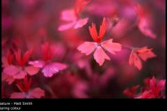 Spring colour - Matt Smith