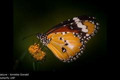 Butterfly LNP - Annette Donald
