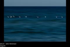Seagulls - John Parkinson