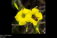 Bee's Bum - Bob Morgan