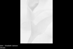 Delicate - Elizabeth Jackson