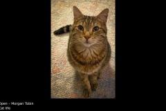 Cat life - Morgan Tobin