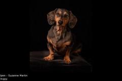 Chippy - Suzanne Martin