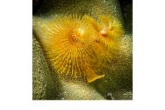 Orange Sea Anenome - Annette Donald (Commended - Open - A Grade - July 2019 PDI)