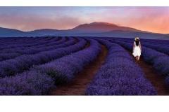 A Stroll through the Lavender - Jane Clancy (Best - Open A Grade - Jun 2019 PDI)