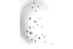 Drops - Alan Donald (Commended - Open A Grade - May 2019 PDI)