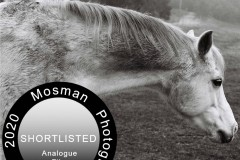 Santina Velo - Mosman Photography Awards Finalist: Analogue Portfolio